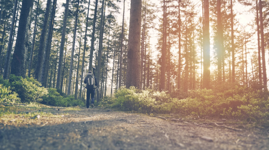 Hiker hiking in forest at sunset. hikers enjoying the awesome view at sunset in a beautiful german forest Schwarzwald landscape. : Stock Photo or Stock Video Download rcfotostock photos, images and assets rcfotostock | RC-Photo-Stock.: