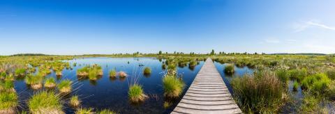 bog lake at the High Fens (Hautes Fagnes) panorama : Stock Photo or Stock Video Download rcfotostock photos, images and assets rcfotostock | RC-Photo-Stock.: