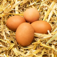 brown eggs in straw- Stock Photo or Stock Video of rcfotostock | RC-Photo-Stock