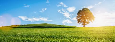 A lonely old bald tree on a fresh green meadow, a vibrant rural landscape with blue sky, banner size- Stock Photo or Stock Video of rcfotostock | RC-Photo-Stock