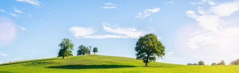 A lonely old bald tree on a fresh green meadow, a vibrant rural landscape with blue sky, panorama- Stock Photo or Stock Video of rcfotostock | RC-Photo-Stock