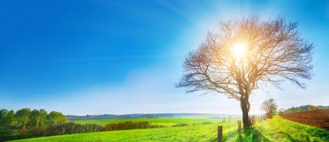 A lonely tree on a green meadow, a vibrant rural landscape with blue sky- Stock Photo or Stock Video of rcfotostock   RC-Photo-Stock