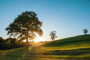 A lonely tree on a green meadow, a vibrant rural landscape with blue sky : Stock Photo or Stock Video Download rcfotostock photos, images and assets rcfotostock | RC-Photo-Stock.: