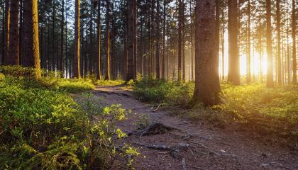 A Path in the Forest- Stock Photo or Stock Video of rcfotostock | RC-Photo-Stock