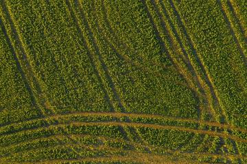 Abstract geometric shapes of agricultural parcels of different crops in yellow and green colors. Aerial view shoot from drone directly above field- Stock Photo or Stock Video of rcfotostock | RC-Photo-Stock
