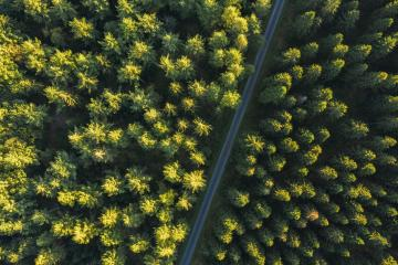 Aerial top view of a path between trees in forest  : Stock Photo or Stock Video Download rcfotostock photos, images and assets rcfotostock | RC-Photo-Stock.: