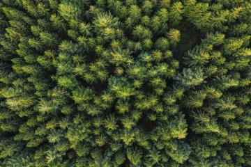 Aerial top view of pine trees in forest. Drone photography- Stock Photo or Stock Video of rcfotostock | RC-Photo-Stock