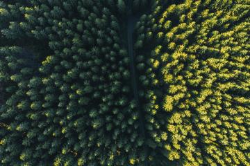 Aerial top view of summer green trees in forest - Stock Photo or Stock Video of rcfotostock   RC-Photo-Stock