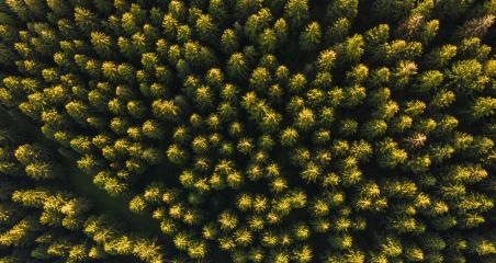 Aerial top view of summer green trees in forest - Drone shot- Stock Photo or Stock Video of rcfotostock | RC-Photo-Stock