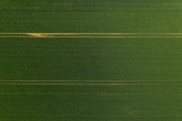 Aerial view of a Green wheat field and tracks from tractor. Beautiful agricultural texture or background of summer agriculture landscape. Drone shot- Stock Photo or Stock Video of rcfotostock | RC-Photo-Stock