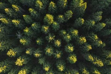 Aerial view of forest in mountains, Germany. Photo taken with Drone- Stock Photo or Stock Video of rcfotostock | RC-Photo-Stock