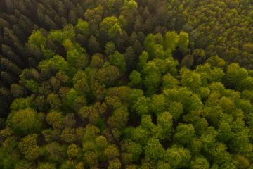 Aerial view of forest in mountains, taken with Drone- Stock Photo or Stock Video of rcfotostock | RC-Photo-Stock