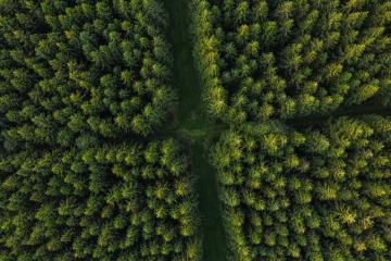 Aerial view of forest paths, Germany. Photo taken with Drone- Stock Photo or Stock Video of rcfotostock | RC-Photo-Stock