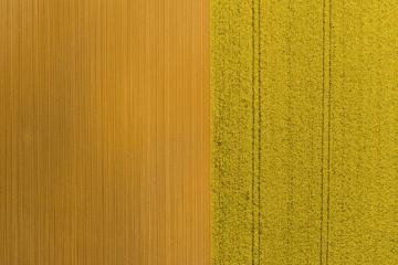 Aerial view of rows of soil before planting rapeseed. Furrows row pattern in a plowed field prepared for planting crops in spring. Drone shot- Stock Photo or Stock Video of rcfotostock | RC-Photo-Stock