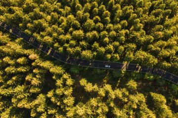 Aerial view of summer forest with a car on the road. Captured from above with a drone- Stock Photo or Stock Video of rcfotostock | RC-Photo-Stock