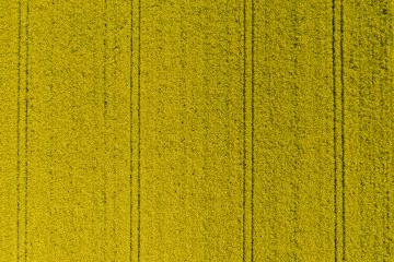 Aerial view over the Canola agricultural field- Stock Photo or Stock Video of rcfotostock | RC-Photo-Stock