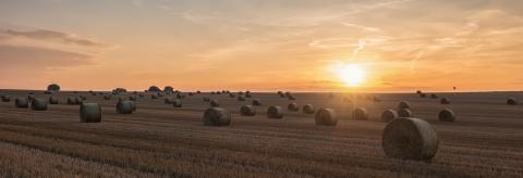 Agricultural field. Round bundles of dry grass in the field against the sunset sky- Stock Photo or Stock Video of rcfotostock | RC-Photo-Stock