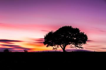 Alone Old tree silhouette on colorful sunset in summer at the Eifel national park : Stock Photo or Stock Video Download rcfotostock photos, images and assets rcfotostock | RC-Photo-Stock.: