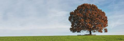 Alone red autumn tree on a meadow with a lot of copyspace : Stock Photo or Stock Video Download rcfotostock photos, images and assets rcfotostock | RC-Photo-Stock.: