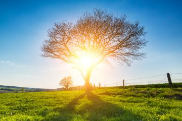 Alone tree on spring meadow at sunset and blue Sky : Stock Photo or Stock Video Download rcfotostock photos, images and assets rcfotostock | RC-Photo-Stock.: