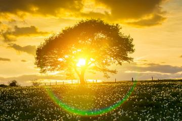Alone tree onspring meadow at sunset with sunray and Cloudy Sky : Stock Photo or Stock Video Download rcfotostock photos, images and assets rcfotostock | RC-Photo-Stock.: