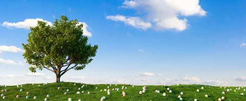 any colorful Easter eggs for Easter in the grass of a meadow around a tree- Stock Photo or Stock Video of rcfotostock | RC-Photo-Stock