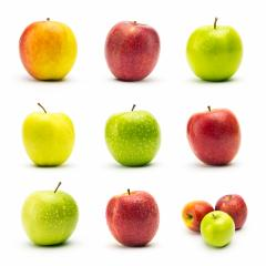 apple varieties with dew drops set- Stock Photo or Stock Video of rcfotostock | RC-Photo-Stock