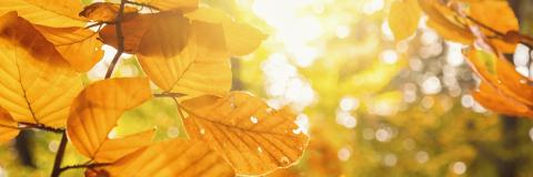 Autumn beech leaves decorate a beautiful nature background with forest ground, panorama format : Stock Photo or Stock Video Download rcfotostock photos, images and assets rcfotostock | RC-Photo-Stock.: