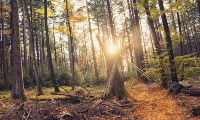 Autumn forest trees landscape with sunlight- Stock Photo or Stock Video of rcfotostock | RC-Photo-Stock