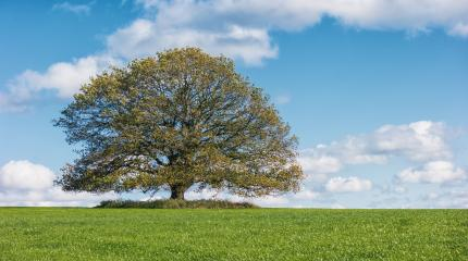 autumn landscape with lonely oak tree- Stock Photo or Stock Video of rcfotostock | RC-Photo-Stock