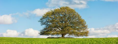 autumn landscape with oak tree and blue sky- Stock Photo or Stock Video of rcfotostock | RC-Photo-Stock