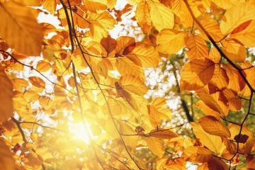 Autumn leaves on the sun. Fall background.- Stock Photo or Stock Video of rcfotostock | RC-Photo-Stock
