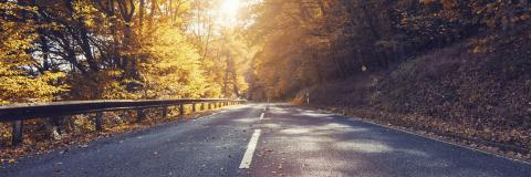 Autumn scene with road in forest and bright sunlight- Stock Photo or Stock Video of rcfotostock | RC-Photo-Stock