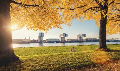 autumn the poller Meadow in cologne germany at the rhine shore- Stock Photo or Stock Video of rcfotostock | RC-Photo-Stock
