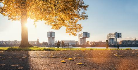 autumn view of the Cologne Skyline at sunset, germany- Stock Photo or Stock Video of rcfotostock   RC-Photo-Stock