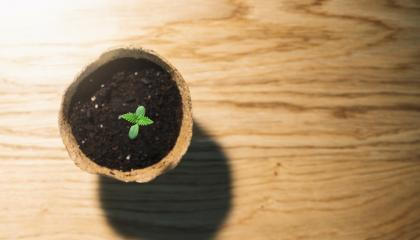 baby cannabis plant in a pot. Vegetative stage of marijuana growing. copyspace for your individual text.- Stock Photo or Stock Video of rcfotostock | RC-Photo-Stock