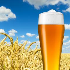 bayerisches weizenbier in einem weizenfeld : Stock Photo or Stock Video Download rcfotostock photos, images and assets rcfotostock | RC-Photo-Stock.: