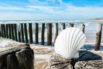 Beautiful beach view with shell on a groyne in Renesse, Holland- Stock Photo or Stock Video of rcfotostock | RC-Photo-Stock