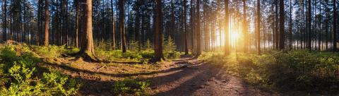 beautiful forest at sunset panroama- Stock Photo or Stock Video of rcfotostock | RC-Photo-Stock