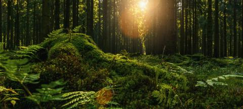 Beautiful forest in autumn with bright sun shining through a Tree trunk- Stock Photo or Stock Video of rcfotostock | RC-Photo-Stock