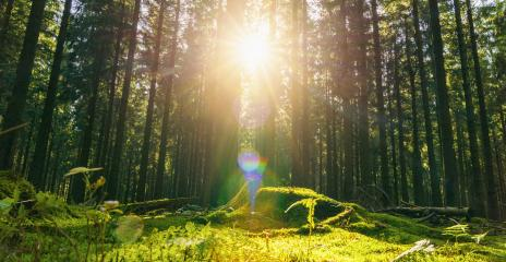 Beautiful forest in autumn with bright sun shining through the trees - Stock Photo or Stock Video of rcfotostock | RC-Photo-Stock