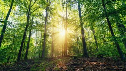 Beautiful forest in spring with bright sun shining through the trees - Stock Photo or Stock Video of rcfotostock | RC-Photo-Stock
