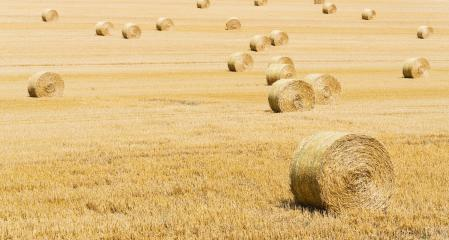 Beautiful landscape. Agricultural field. Round bundles of dry grass in the field.- Stock Photo or Stock Video of rcfotostock | RC-Photo-Stock