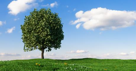 Beautiful landscape with lone tree stands in a green field, copy space for individual text- Stock Photo or Stock Video of rcfotostock | RC-Photo-Stock