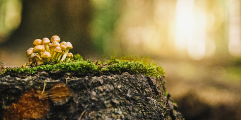 beautiful mushroom in grass on a tree trunk, autumn season. little fresh mushroom on moss, growing in Autumn Forest. copyspace for your individual text,- Stock Photo or Stock Video of rcfotostock | RC-Photo-Stock