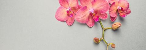 Beautiful orchid flower- Stock Photo or Stock Video of rcfotostock | RC-Photo-Stock