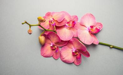 Beautiful Orchid Flowers- Stock Photo or Stock Video of rcfotostock | RC-Photo-Stock