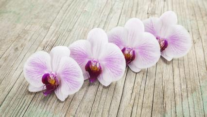 beautiful Phalaenopsis orchid flowers on wooden background- Stock Photo or Stock Video of rcfotostock | RC-Photo-Stock