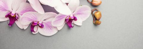 Beautiful pink orchid flower banner with copy space- Stock Photo or Stock Video of rcfotostock | RC-Photo-Stock