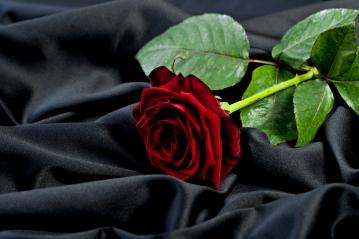 beautiful red rose on a background of black satin silk : Stock Photo or Stock Video Download rcfotostock photos, images and assets rcfotostock | RC-Photo-Stock.: